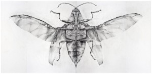 <strong>Joianne Bittle</strong>, <em> Jewel Beetle (ventral view)<em>, 2007 graphite on paper 44 x 90.5 inches